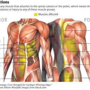 What Is My Core, and Why Is Core Strength Important?